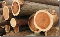 天竜美林より伐採された丸太1